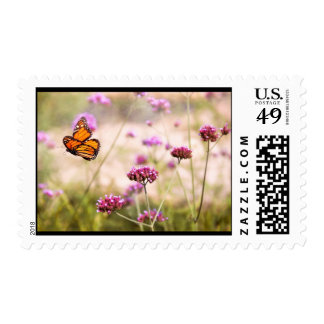 Butterfly - Monarach - The sweet life Postage Stamps