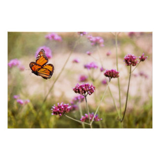 Butterfly - Monarach - The sweet life Poster