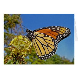 Butterfly Monarch Card