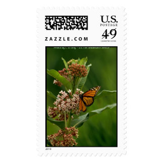 Butterfly / Monarch Stamps