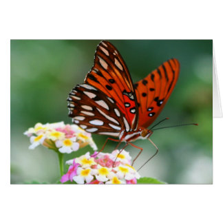Butterfly Morning Card