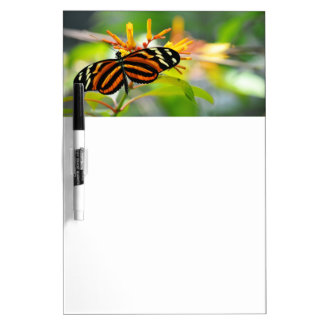 Butterfly Morning Dry-Erase Board
