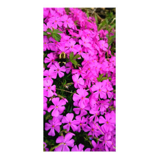 Butterfly Moth/Clearwing Moth On Phlox Card