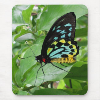 Butterfly Mousepad! Mouse Pad
