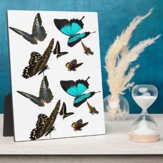 Butterfly multi Plaque 3 sizes