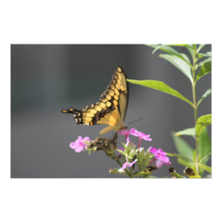 Butterfly 'N' Flowers Photographic Print