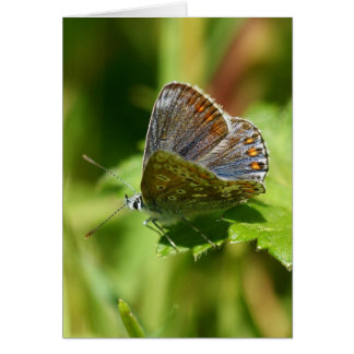 Butterfly - Northern Brown Argus, Any Occasion Card