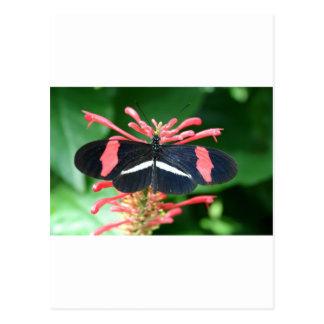 Butterfly of Splendor Handbag Get Ready for SPRING Postcard