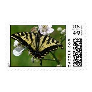 Butterfly on a Blackberry Blossom Postage Stamp