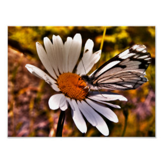 Butterfly On A Daisy - Surreal Photo Poster 9x12