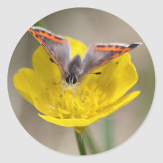 Butterfly on a Flower Classic Round Sticker