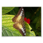 Butterfly on a leaf posters