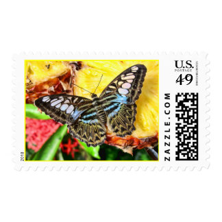 Butterfly on a Pineapple Postage Stamps