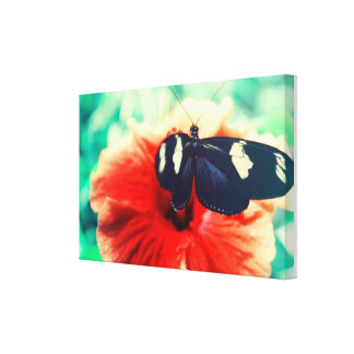 Butterfly on a Pink Flower Canvas Print