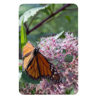 Butterfly on a Pink Flower Photo Magnet