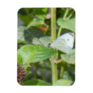 Butterfly on a Plant Photo Magnet