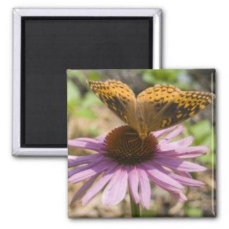 Butterfly on a Purple Coneflower Fridge Magnet