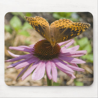 Butterfly on a Purple Coneflower Mouse Pad