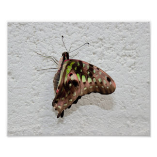 Butterfly on a Wall Poster