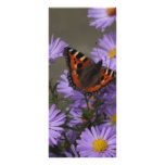 Butterfly on Asters Full Color Rack Card
