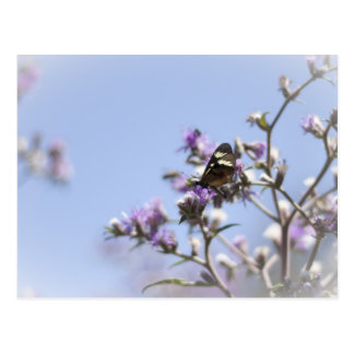 Butterfly on Blossom Branch Postcard