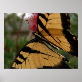 Butterfly on Brush, Image byA. Agnelli Poster