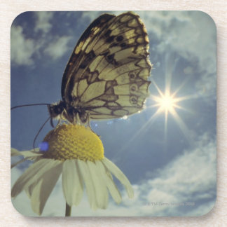 Butterfly on camomile flower with sun, drink coaster