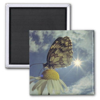 Butterfly on camomile flower with sun, magnet