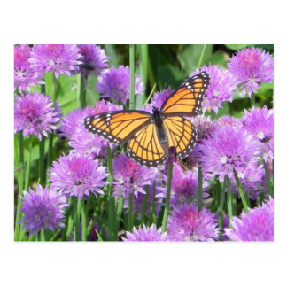 butterfly on chives postcard