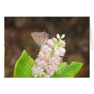 Butterfly on Clethra Bush Card