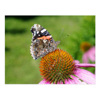 BUTTERFLY ON  CONE FLOWER POSTCARD