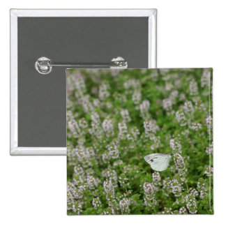 Butterfly on Creeping Thyme 2 Inch Square Button