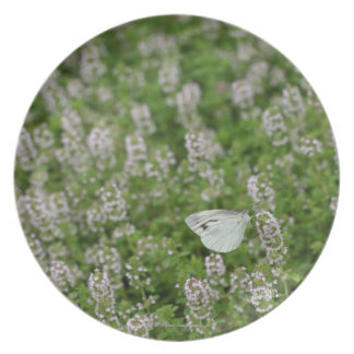 Butterfly on Creeping Thyme Dinner Plate