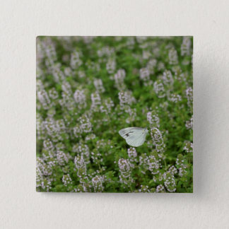 Butterfly on Creeping Thyme Pinback Button