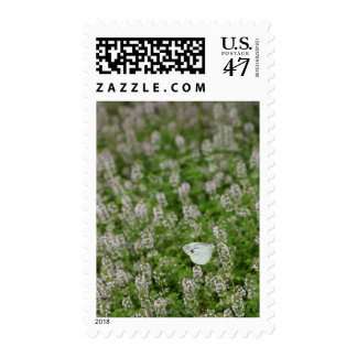 Butterfly on Creeping Thyme Stamp