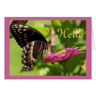 Butterfly on daisy greeting cards