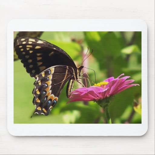Butterfly on daisy mouse pad