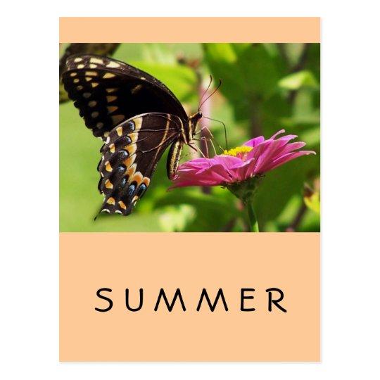 Butterfly on daisy postcard