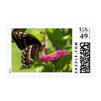Butterfly on daisy stamp