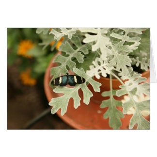 Butterfly on Dusty Miller Canvas Print Card