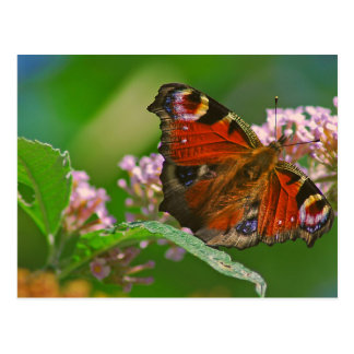 Butterfly on flower head in summer postcards