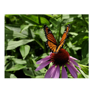 Butterfly on Flower in Upstate NY Postcard