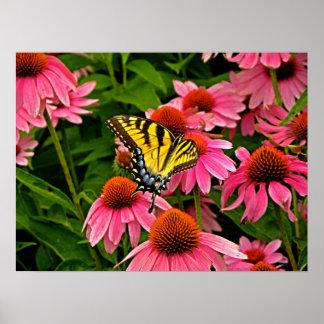 Butterfly on Flower v21 Poster