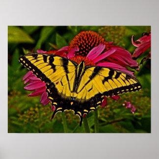 Butterfly on Flower v3 Poster