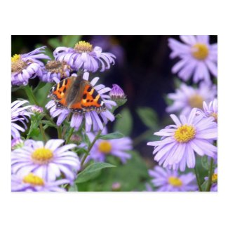 Butterfly On Flowers Postcard