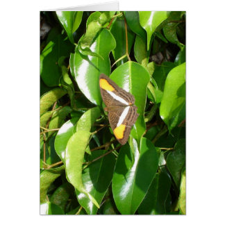 Butterfly on green stationery note card