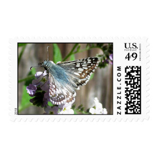 Butterfly on Heliotrope Postage