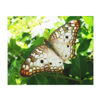 Butterfly on Jasmine Tropical Nature Photography Canvas Print