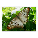 Butterfly on Jasmine Tropical Nature Photography Card