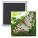 Butterfly on Jasmine Tropical Nature Photography Magnet